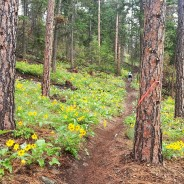 """Spring Rush"" Trail Race Recap"